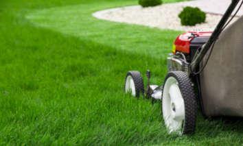tonte de pelouse roncq